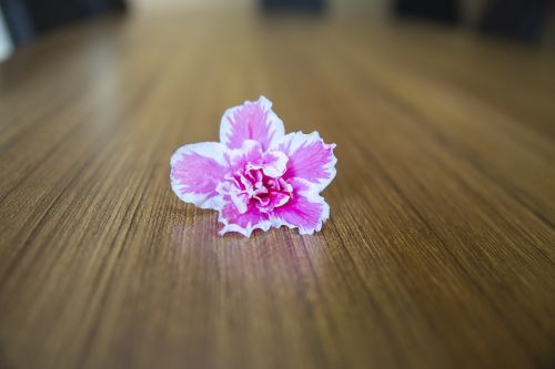 floweers and table,backround,desk