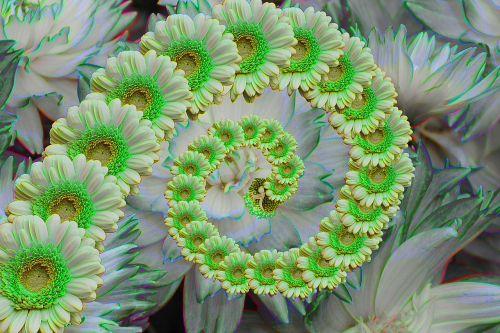 gėlė,kūrybingas,gėlės