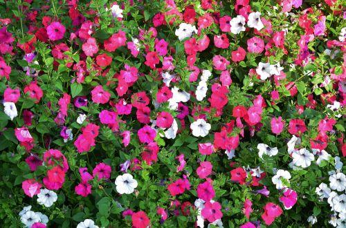 flower natur plant