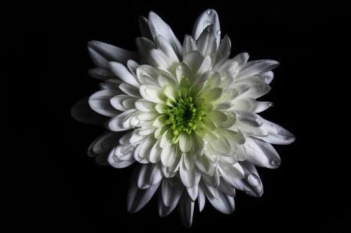 flower colour green