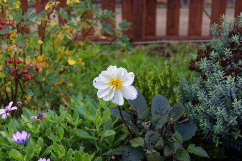 flower white flower nature