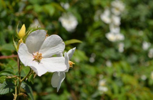 flower nature beauty
