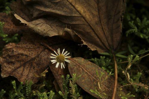 gėlė,gamta,lakštas