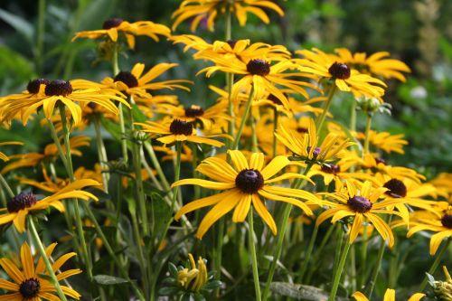 flower floral golden