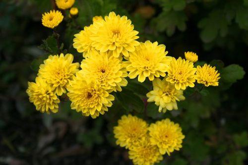 gėlė,sodas,geltona,taikus,nuotaika,sodininkystė,sodininkystė,spalvos,gėlės,augalas,sodinti,flora