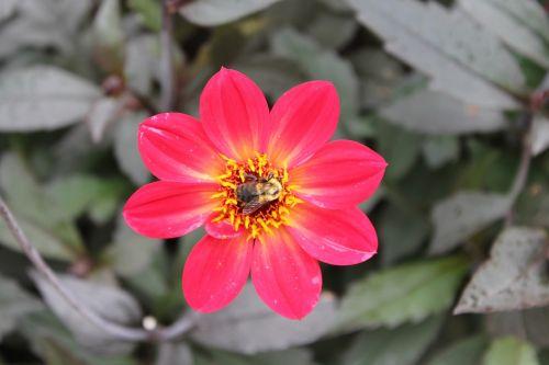flower closeup bee