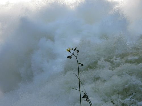 flower water power
