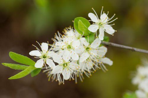 blossom bloom flower