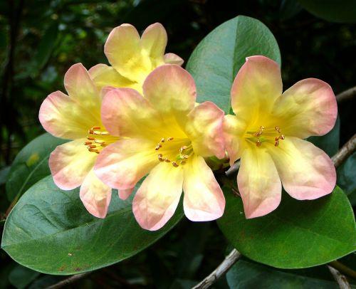 flower tropical rain forest