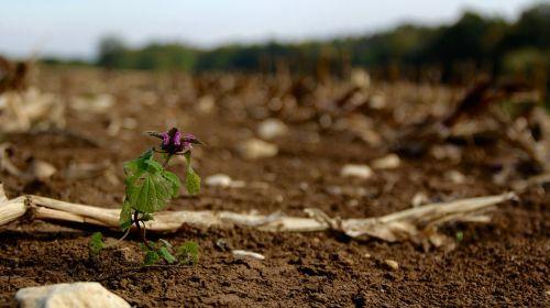 gėlė,purvas,žalias,augalas,purvas,ruda,žemė,makro