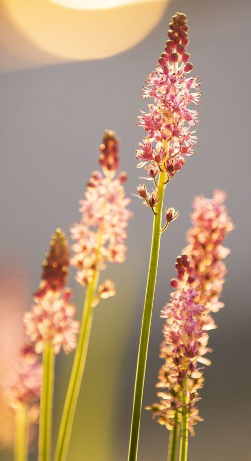 flower upward fight