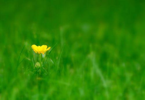 flower meadow pointed flower