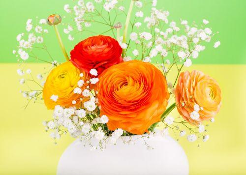 flower ranunculus orange