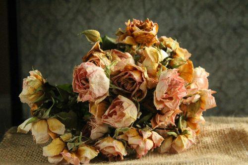 flower flowers rose
