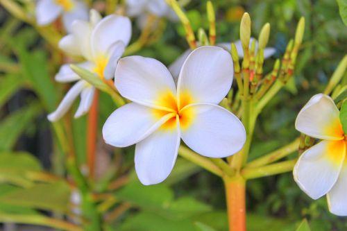 flower leelawadee wellness