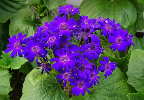 flower seasonal flora