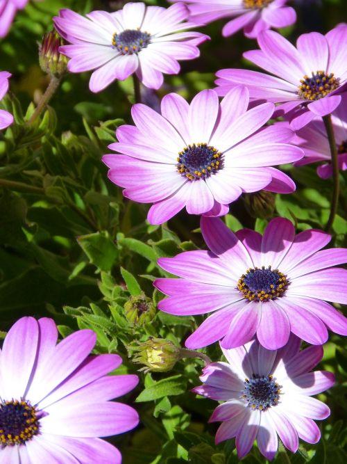 flower magenta pink