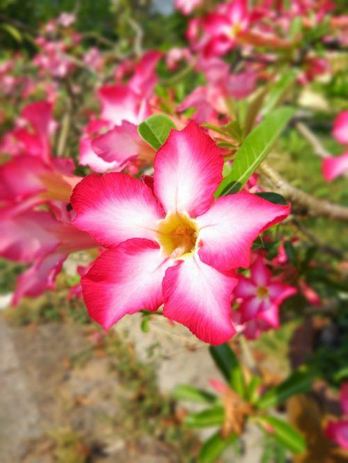 flower daisy blossom