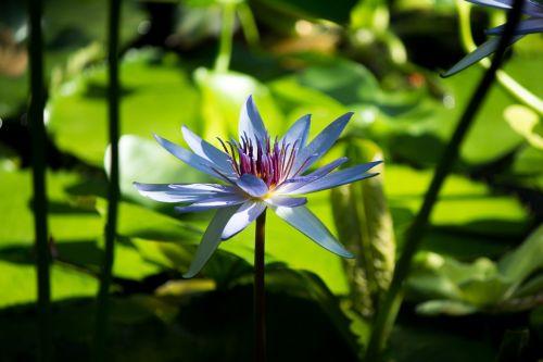 flower zen tranquil