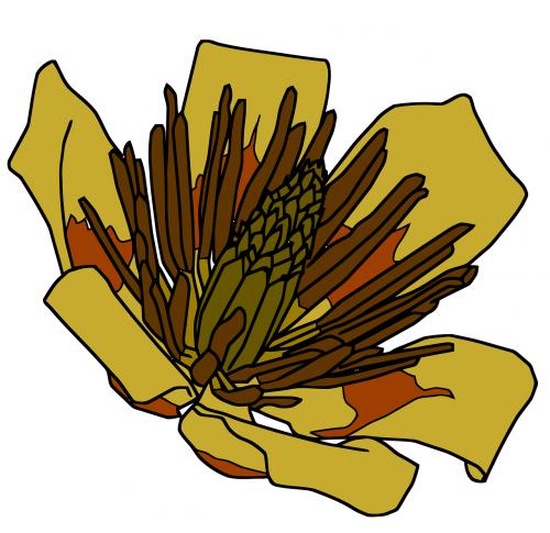 gėlė,medžio gėlė,tulpių paprikas,tulpių medis,nemokama vektorinė grafika
