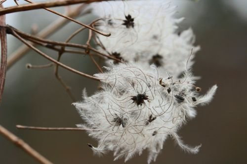 flower threads white