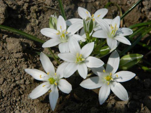 flower spring garden