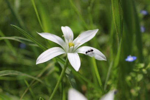 flower ant petals