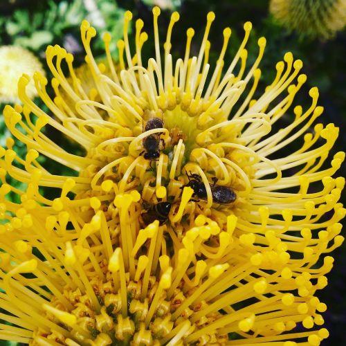 flower bee nature