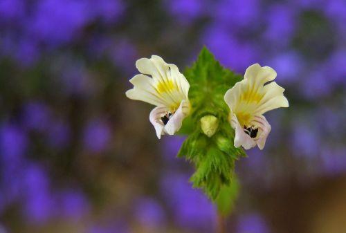 flower white skylight meadow