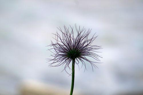 flower strange whisk