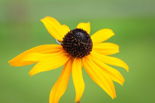 flower sun hat yellow