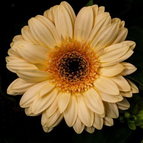 gėlė,gėlės,vasaros gėlės,graži gėlė,gamta,sodo gėlės,augalas,vasara,gražus,gražios gėlės,sodo gėlė,baltos gėlės,balta gėlė,pavasaris,žydėti