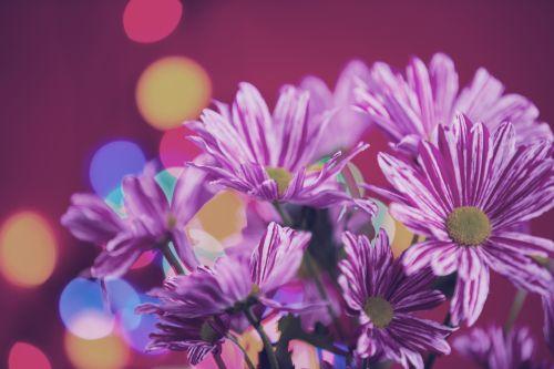 gėlė, gėlės, meilė, natūralus, gamta, valentine, Bokeh, fonas, gėlė