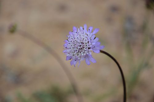 flower violet garden