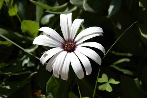 flower macro petals