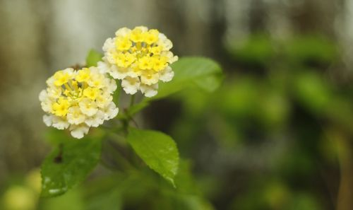 flower yellow white combination natural