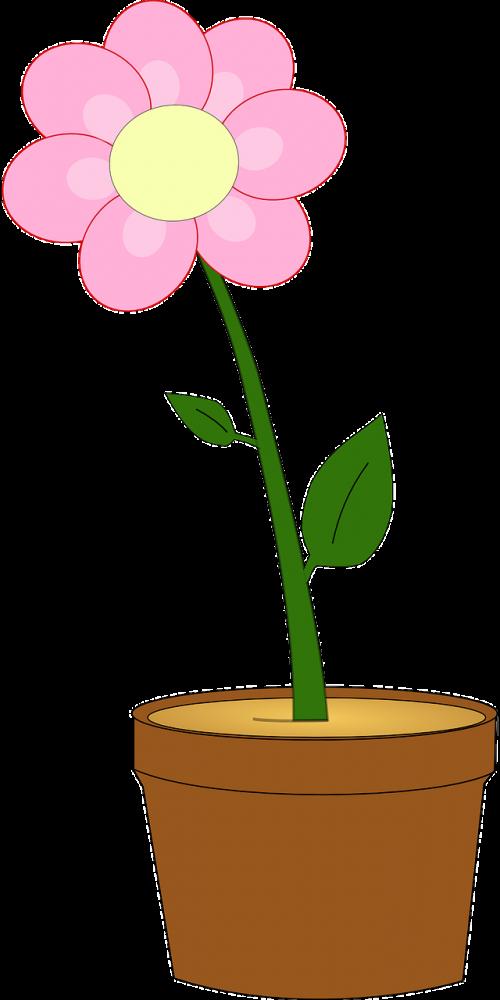 flower pot plant