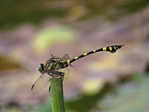 flower dragonfly insect