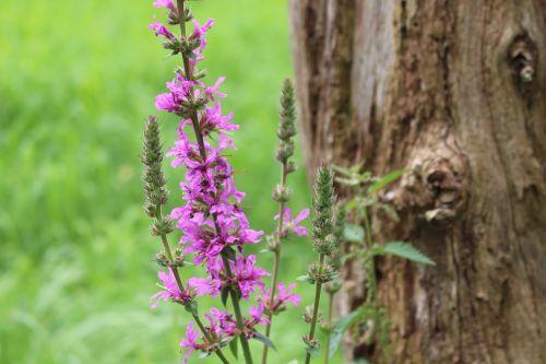 flower purple nature