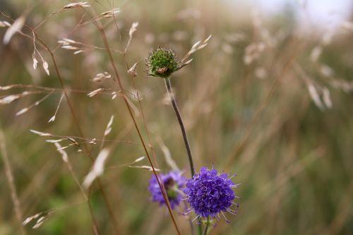 flower purple green