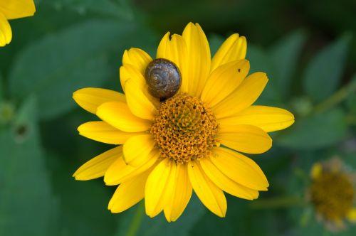 flower sun hat ordinary sonnenhut