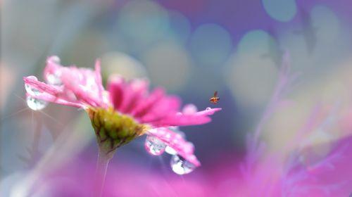 gėlė,žiedas,žydėti,oranžinė,augalas,gamta,žiedynas,gražus,saulėtas,spalvinga,šviesus,makro,Uždaryti,budas,atidarymas,pavasaris,vasara,šiltas,minkštas,bičių,žiedadulkės,apdulkinimas,vabzdys,violetinė,vandens lašai,lašelis,Bokeh,Daisy,zinnia,kraštovaizdis,sodininkystė,lauke,sodas,dušas,drėgmė,gaivus,parkas,diena,lašas,pabarstyti