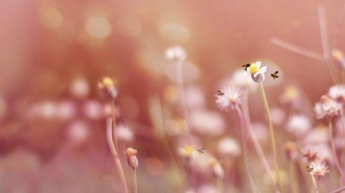 gėlė,žiedas,žydėti,oranžinė,augalas,gamta,žiedynas,gražus,saulėtas,spalvinga,šviesus,makro,Uždaryti,budas,atidarymas,pavasaris,vasara,šiltas,minkštas,bičių,žiedadulkės,apdulkinimas,vabzdys,violetinė,vandens lašai,lašelis,Bokeh,pieneliukas,sodininkystė,lauke,sodas,gaivus,parkas,diena