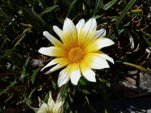 flower petal leaf