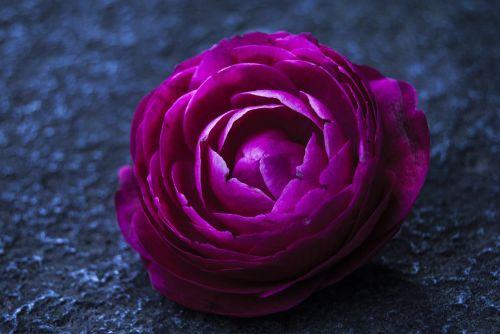 flower colors flower color pink