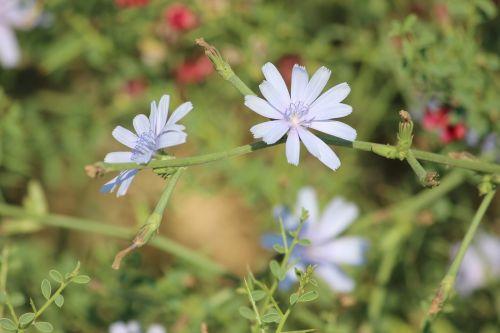 flower plant concerning