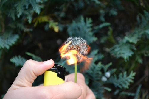flower fire flammable