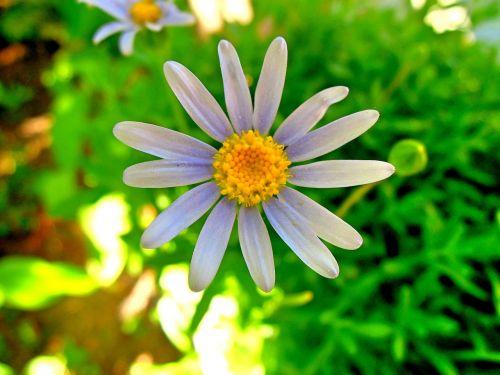 flower white wild flower