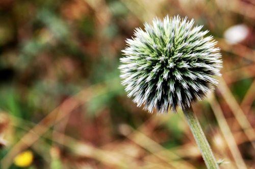 flower nature macro