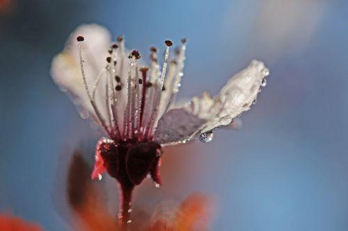 flower spring artistic